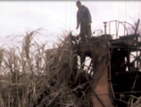 December 29, 1976: Plight of the Sugar Cane Worker in South Louisiana